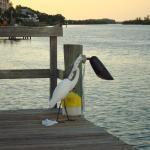 Bird friends on the dock, bay side