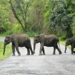 Ture for miljøinteresserede