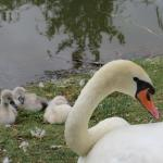 Parc Animalier Friedel