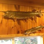 Clam Bar - trophy fish mounted on wall