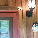Photo de Cramer's Creekside Cabins