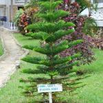 onze boom na 3 jaar