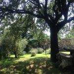 Photo of Agriturismo podere bello