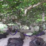 hammocks under a tree!