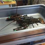 Good Maine lobster experience