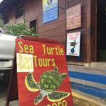 Sea turtle tours
