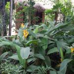 Foto de Botanica Guest House