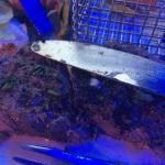 Steak et entrecôte de mauvaise qualité, caoutchouc sans goût!