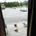 Patio Door View