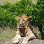 Africa Unike Adventures and Safaris - Day Tours Foto
