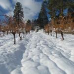Even in winter the vineyard is beautiful