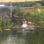 Unsere Tochter beobachtet die tollen Fische im Teich