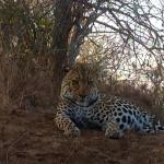 Leopard and cub sightings that thrilled me
