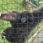 Tierpark Bad Pyrmont Foto