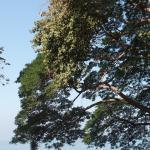 Дерево на территории отеля
