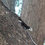На огромном дереве живут белки, людей не боятся