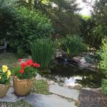 Beautiful Koi Pond, a lovely porch to relax, unwind and drink some wine.