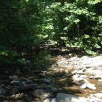 Picture from the Moorman's River Trail