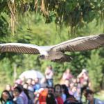 Birds of prey Demonstration