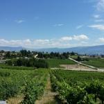 Little Straw Vineyards Foto