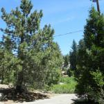 Photo of Grant Grove