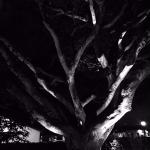 Foto de Ghost Tour of Old Monterey