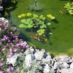 il laghetto in giardino