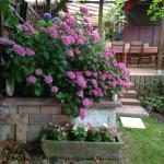 Un aspect du jardin