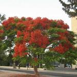 Дерево на соседней улице- глаз не оторвать
