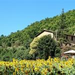 View of Santa Chiara from the field below