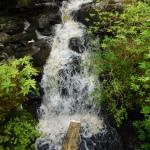 Creek from bridge.