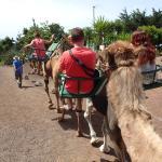 camellos el tanque
