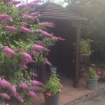Beautiful flowers outside the Oldroyd.