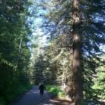 Running on west side of trail