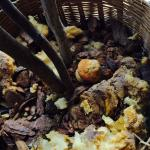 Rotting breakfast muffin (and other nasty looking stuff) in flower pot, stinking up hallway
