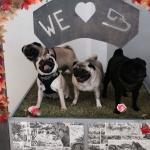 pug love at the dug cafe