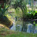 Petite mare dans le parc