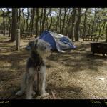 My dog at Adventure Bound