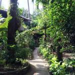 Foto de Orchids Resort