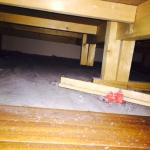 Unbelievable amount of dust and crap under the bed!!!!