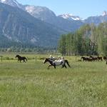 The ranch horses return to pasture with the Tetons as a backdrop.