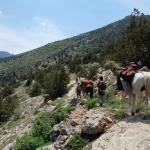 Golestan Nationalpark: Trekking mit Lastpferden