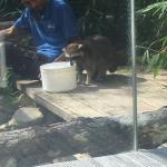 Bolaven Cafes Langkawi