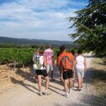 VMV Vignerons du Mont Ventoux Foto