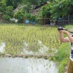 rice field in hill tribe trip