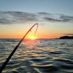 Salty Dog Fishing Charters