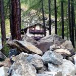 la posizione  nel bosco