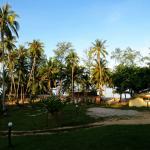 Vista da varanda sobre o coqueiral.