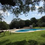 View of the pool from under the olive trees