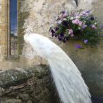 Foto de Amberley Castle